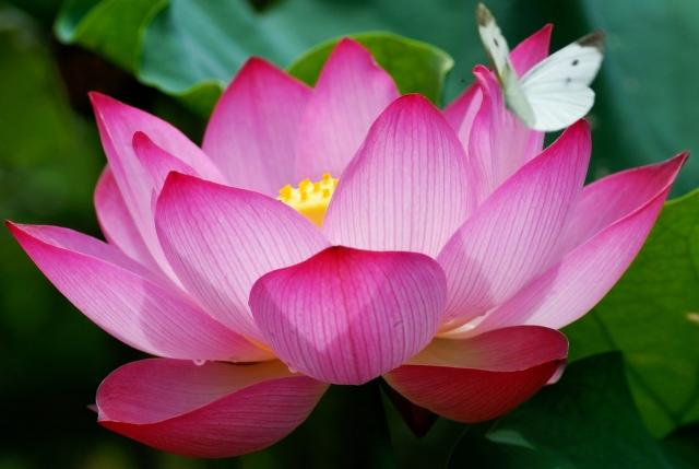 Sanskrit word moonlight chai lotus flower having a personal mantra can really help you through a tough situation repeating it over and over can calm you down lift your mood and allow mightylinksfo